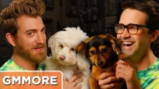 Rhett & Link Dog Update - Good Mythical More