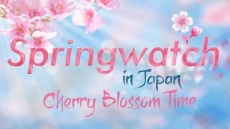Springwatch in Japan: Cherry Blossom Time